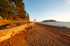 coastal log at sunset - stock photo