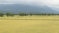 Rural scenery of green farm under nice sky, landscape , Taiwan, Asia. Stock Footage