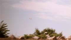 Perhonen lentää luonnossa Arkistovideo