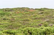 Stock Photo of heathlands scenery