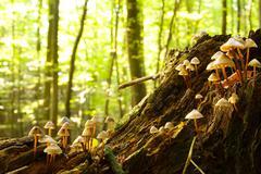 Forest fungi Stock Photos