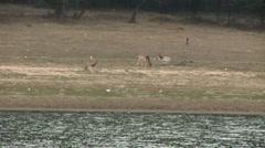 Herd of deer on the meadow Stock Footage