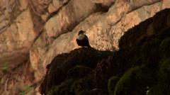 Little marsh bird Stock Footage