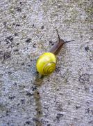 Yellow snail on wall Stock Photos