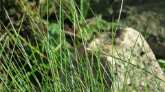 Windy grass in an autumn - stock footage