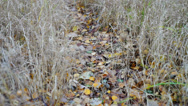 Stock Video Footage of Forest path strewn with autumn leaves