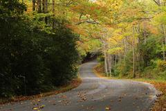 Autumn leaves road Stock Photos