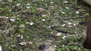 Stock Video Footage of rubbish in the river