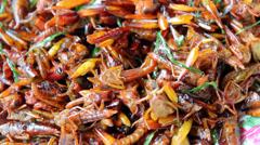 fried grasshopper - stock footage