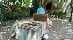 Bees on honeycomb. Beekeeping man gently to test the honey comb Stock Footage