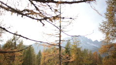 Yellow grass field and pine trees in autumn | Italian Alps | Rotating Dolly shot Stock Footage
