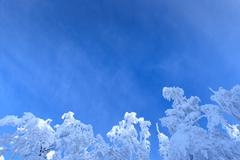 Hoar-frost on trees in winter Stock Photos