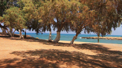 Grove of trees against the sea Stock Footage