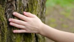 Little Girl's Hand Touches Tree - stock footage