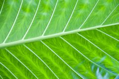 Green leaf detail Stock Photos