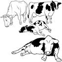 Stock Illustration of Cow Collection