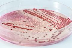 Microbiology Stock Photos