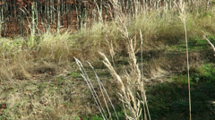 Windy dry grass - stock footage
