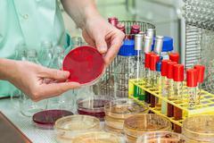 In laboratory Stock Photos