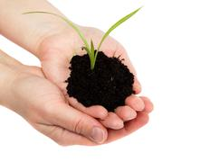 woman's hand with a green sprout in the ground on a white background. - stock photo