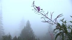 Dense fog Stock Footage
