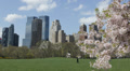 Spring Central Park New York City Skyline Grass Meadow Cherry Tree Blooming HD Footage