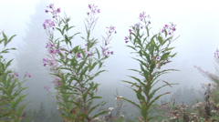Flowers and trees in fog Stock Footage