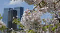 Central Park New York City Skyscrapers Cherry Trees Blossom Flowers Nature NYC Footage