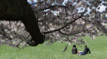 NYC Central Park Cherry Trees Bloom Young Romantic People Relaxing Meadow Lawn Footage