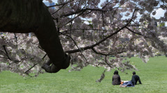 NYC Central Park Cherry Trees Bloom Young Romantic People Relaxing Meadow Lawn Stock Footage