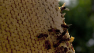 Stock Video Footage of honey comb