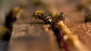 Stock Video Footage of beekeeper and honey comb