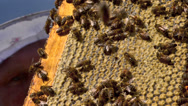 Stock Video Footage of honey apiary