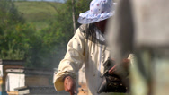 Stock Video Footage of gathering honey apiary