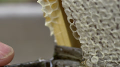 Bees  and honey comb macro Stock Footage