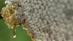 Stock video footage bees  and honey comb macro - stock footage