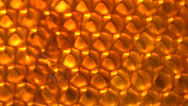 Stock Video Footage of honey comb macro