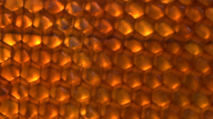 Stock video footage honey comb macro Stock Footage