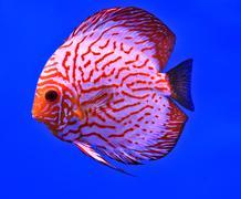 Fish in the aquarium glass Stock Photos