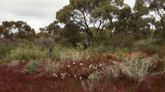 australian bush 1 - stock footage