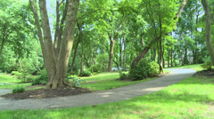 Tree-lined pathway - stock footage