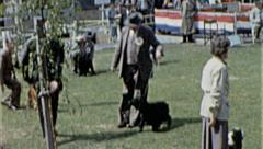 Judge DOG SHOW Competition Judging 1960s Vintage Film Retro Home Movie 7253 Stock Footage