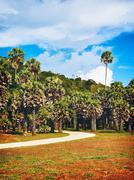 Viidakko park Kuvituskuvat