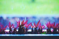 flowers under rain - stock photo