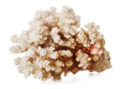 beautiful coral - stock photo