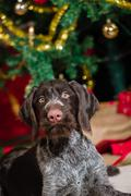 Puppy and christmas tree Stock Photos