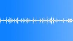 Thicket morning bird peeps 01 30 loop Sound Effect