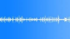 Thicket morning bird peeps 01 60 loop Sound Effect