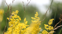 Beautiful scenery, yellow flowers move in spring breeze blur background Stock Footage