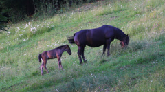 Mother horse and baby colt graze on green hill Stock Footage